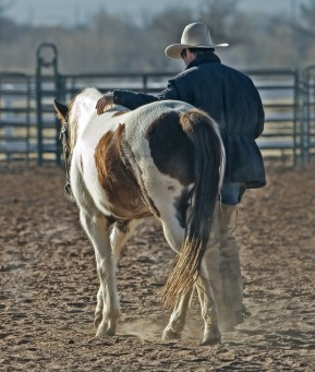 cowboy-419083_1920